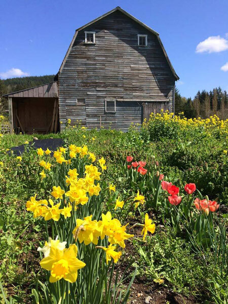 Barn with spring flowers